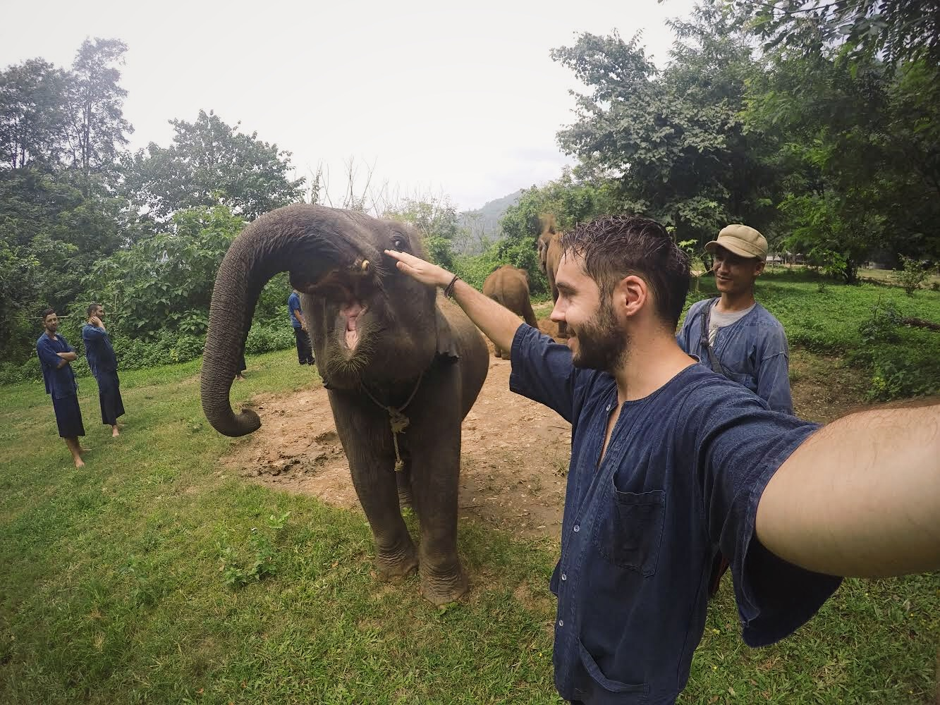 elefante lolanoviajasola