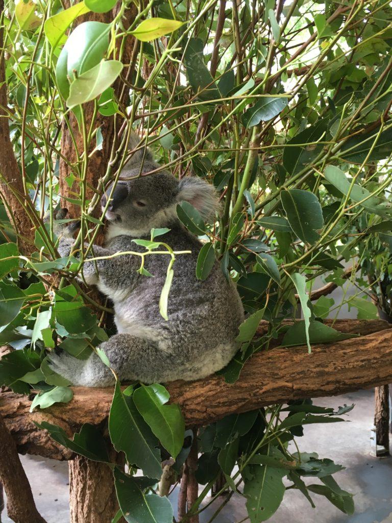 lolanoviajasola australia queensland