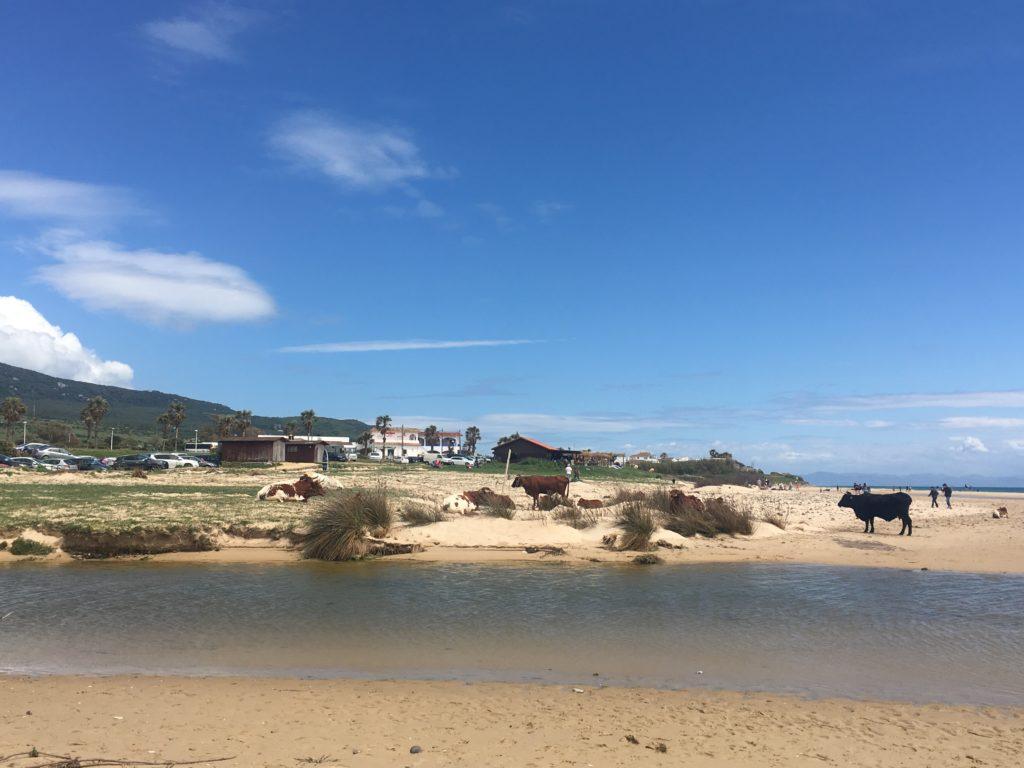 cadiz bolonia playa vacas